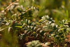 抽象早晨自然夏天墙纸 库存照片