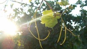 抽象早晨自然夏天墙纸 库存图片