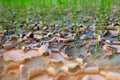 抽象旱田软性被弄脏的和软的焦点,破裂的地球纹理,水稻领域干燥种子播种方法在泰国 由 免版税图库摄影