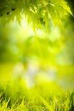 抽象春天本质绿色背景 免版税库存照片