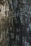 抽象木吠声纹理 库存图片