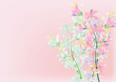 抽象杜娟花在背景的白色背景开花 库存图片