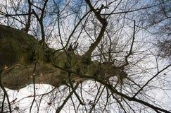 抽象树型视图 免版税库存图片