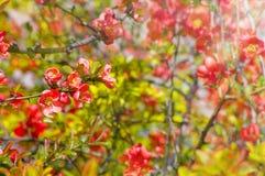 抽象梦想的美丽的晴朗的草甸有花背景 免版税库存照片