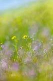 抽象梦想的美丽的晴朗的草甸有花背景 库存图片