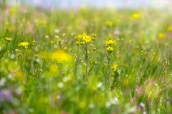 抽象梦想的美丽的晴朗的草甸有花背景 免版税图库摄影