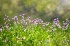 抽象梦想的美丽的晴朗的草甸有花背景 免版税库存图片