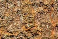 抽象棕色老吠声树墙纸背景纹理 库存照片