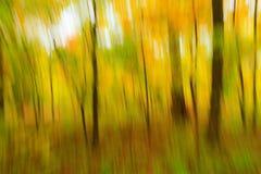 抽象森林地视觉 图库摄影
