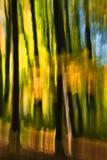 抽象森林秋天横向 库存照片