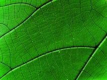 抽象森林雨 免版税库存照片