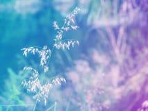 抽象模糊的草花五颜六色的背景 库存图片