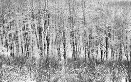 抽象横向冬天 免版税库存图片