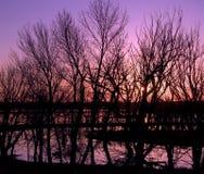 抽象洪水紫色日落 库存图片