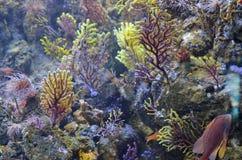 抽象海洋backround 珊瑚、海藻和海异乎寻常的鱼 免版税库存图片