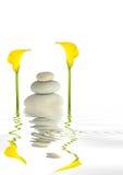 抽象海芋属植物百合小卵石 免版税库存图片