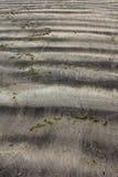抽象海滩 免版税图库摄影
