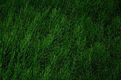 抽象灌木在水平绿色的背景中 库存照片