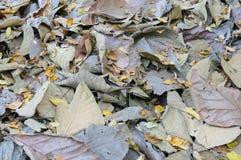 抽象烘干叶子秋天背景 免版税图库摄影