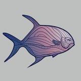 抽象热带鱼 免版税图库摄影