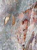 抽象玉树吠声样式 免版税库存图片