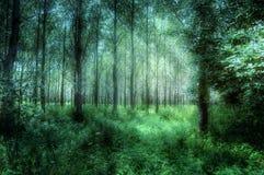抽象神秘的半森林 库存图片