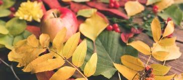 抽象秋叶分类概念 免版税库存照片