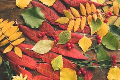 抽象秋叶莓果分类 库存照片