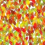 抽象秋天五颜六色的叶子背景 免版税库存图片