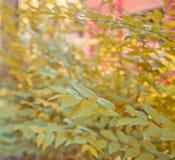 抽象秋天叶子树背景 库存图片