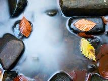 抽象秋天明亮的颜色下跌叶子好的模式红色半 腐烂的老叶子细节在玄武岩石渣的在被反映的水中 库存图片