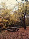 抽象秋天明亮的颜色下跌叶子好的模式红色半 库存照片