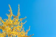 抽象秋天明亮的颜色下跌叶子好的模式红色半 图库摄影