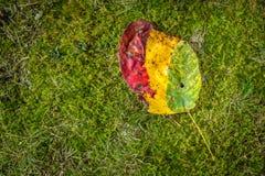 抽象秋天明亮的颜色下跌叶子好的模式红色半 免版税库存图片