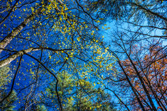 抽象秋天明亮的颜色下跌叶子好的模式红色半 库存图片