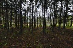 抽象秋天森林地森林12 免版税图库摄影