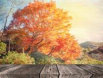 抽象秋天森林迷离背景 库存照片