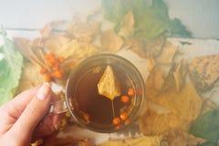 抽象秋天概念-黄色和红色秋叶和杯子无奶咖啡 免版税图库摄影