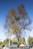 抽象秋天结构树反映 库存图片