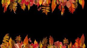 抽象秋天背景五颜六色的框架叶子叶子 免版税图库摄影