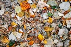 抽象秋天背景五颜六色的框架叶子叶子 免版税库存图片