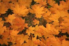 抽象秋天背景五颜六色的框架叶子叶子 库存照片