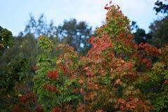 抽象秋天背景五颜六色的框架叶子叶子 免版税库存照片