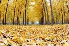 抽象秋天背景叶子 免版税图库摄影