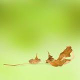 抽象秋天背景明亮的叶子 库存图片