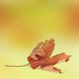 抽象秋天背景明亮的叶子 库存照片