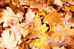 抽象秋天背景,黄色叶子 免版税图库摄影