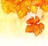 抽象秋天背景 免版税图库摄影