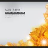 抽象秋天自然背景 免版税库存图片
