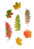 抽象秋天设计叶子 库存图片
